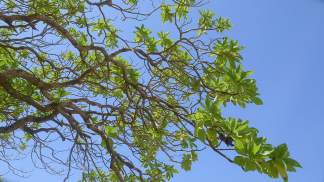 a green tropical tree in sunny afternoon on windy beach with blue sky in background - fronda video stock e b–roll