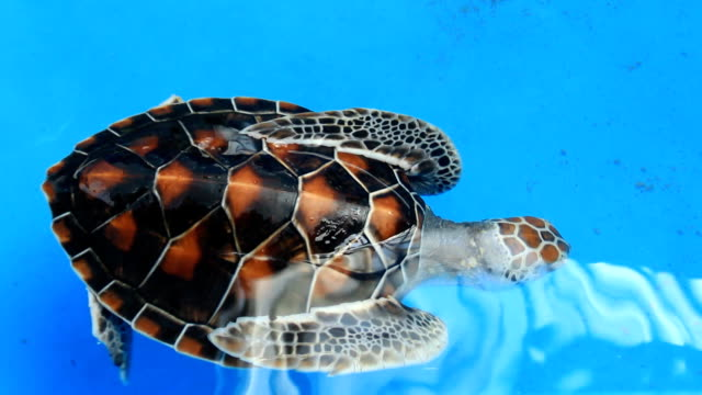 Green turtle Green turtle tortoise shell stock videos & royalty-free footage