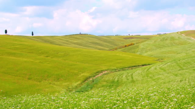 SLO MO Green Tuscan fields video