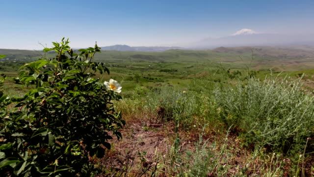 Green valley ararat Armenia timelapse video video