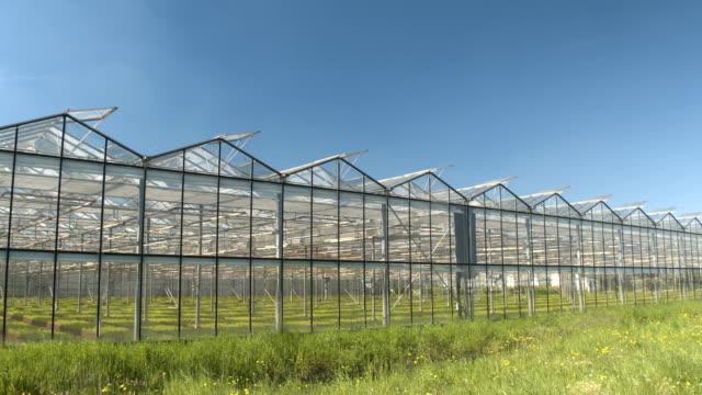 close up: grünes gemüse wachsen in atemberaubenden modernen gartenbau gewächshäuser - gewächshäuser stock-videos und b-roll-filmmaterial