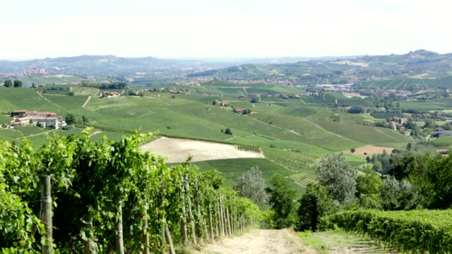 green vine leaves and langhe hills vineyards in italy - langhe video stock e b–roll