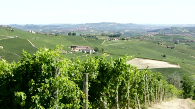 green vine leaves and langhe hills vineyards in piedmont, italy - langhe video stock e b–roll