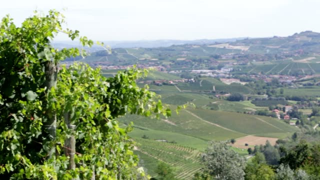 green vine leaves in summer breeze, langhe hills pan in italy - langhe video stock e b–roll