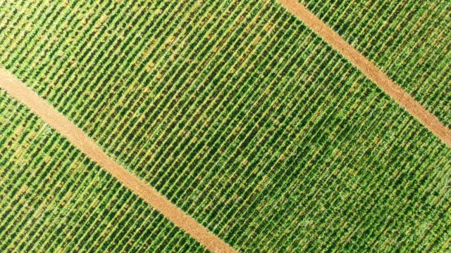 green vineyards in summer, aerial video - farm stock videos & royalty-free footage