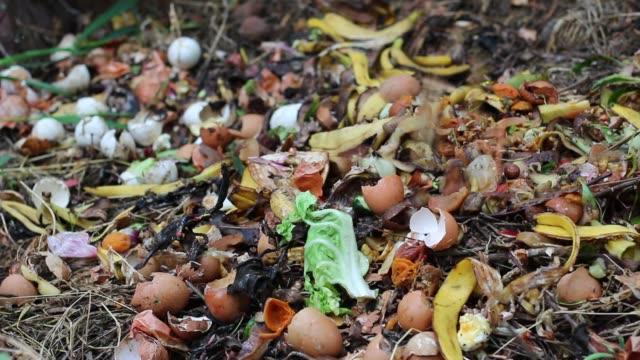 grönt avfall (lämnar, mat avfall) - food waste bildbanksvideor och videomaterial från bakom kulisserna