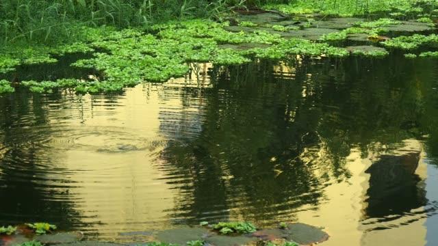 vidéos et rushes de eau verte avec reflet vert de feuille et de l'eau - lac reflection lake