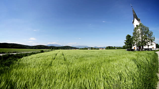 Green wheat field in front of a small church video