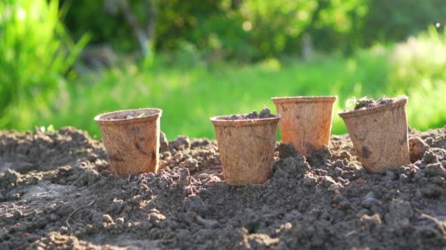 vídeos y material grabado en eventos de stock de plantas jóvenes verdes en macetas en el suelo con luz solar. - tiesto