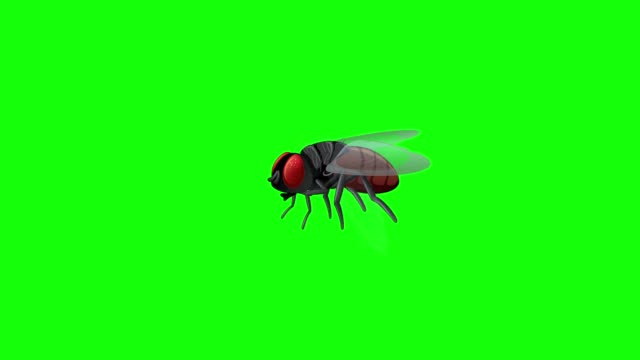 Greenbox Housefly