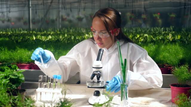 vidéos et rushes de spécialiste de la verdure travaille avec un microscope. concept de modification génétique. - herbicide