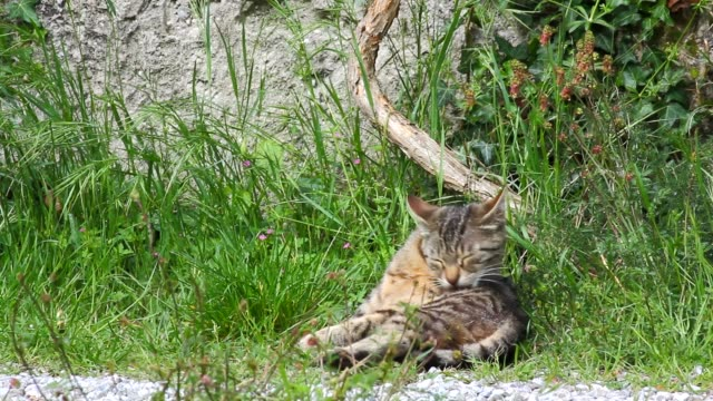 Green-eyed Cat among the Grass