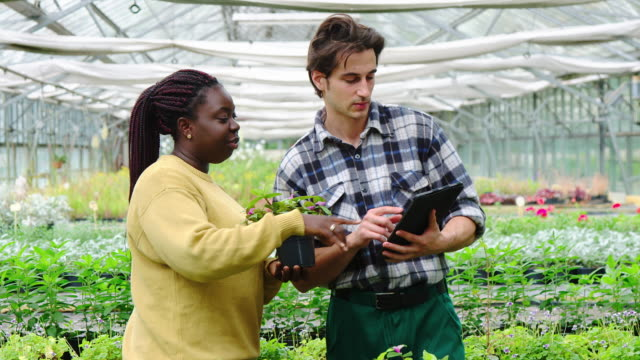 Greenhouse employees examining saplings in nursery Greenhouse employees examining saplings in nursery. Male and female garden workers using digital tablets. plant nursery stock videos & royalty-free footage