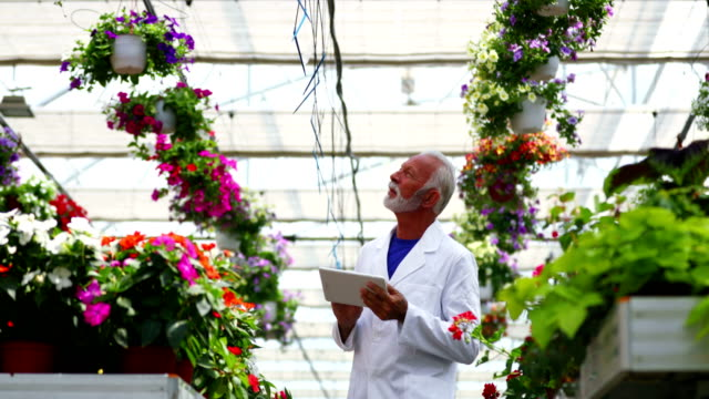 Greenhouse florist. Closeup low angle of a mid 50's caucasian man taking notes about the plants while slowly walking through a greenhouse between the aisles. He's using digital tablet to take notes. hydroponics stock videos & royalty-free footage
