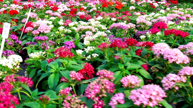 Greenhouse flower shop flyover Closeup wide angle flyover of greenhouse potted flower plants. There are many multicolored sorts shot in a slow motion, 4 times slowed down. plant nursery stock videos & royalty-free footage