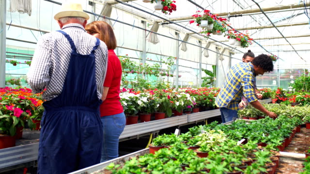 Greenhouse flower shop Closeup wide angle dolly of a flower greenhouse employee showing some potted flowers to a customer. There are two male customers in background also choosing some plants for their home. wide angle stock videos & royalty-free footage