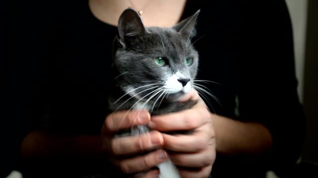 серый cat - кошка смешанной породы стоковые видео и кадры b-roll