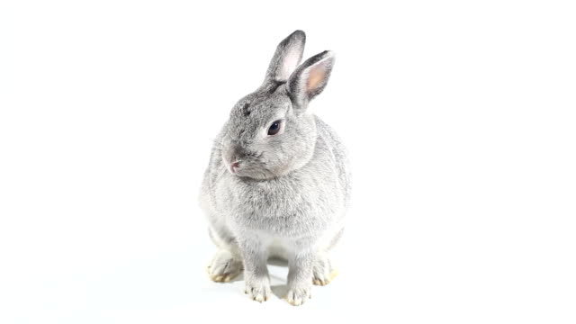 Rabbit stock videos