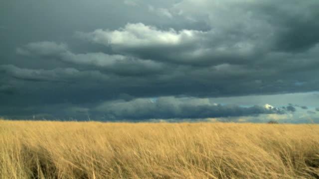 grauen wolken über die afrikanische savanne - savanne stock-videos und b-roll-filmmaterial