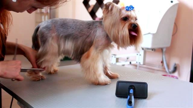 Royalty Free Pet Grooming Salon Hd Video 4k Stock Footage B Roll
