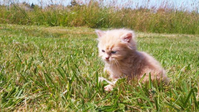 Grooming Kitten video