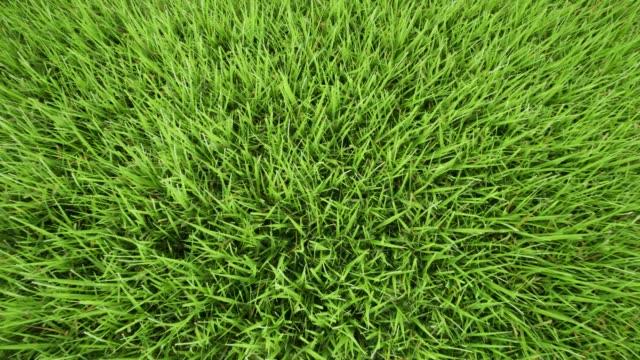 Ground landscape grassland pattern. Garden design. Green bush. Summer green garden. Top view. Beautiful spring garden 4k