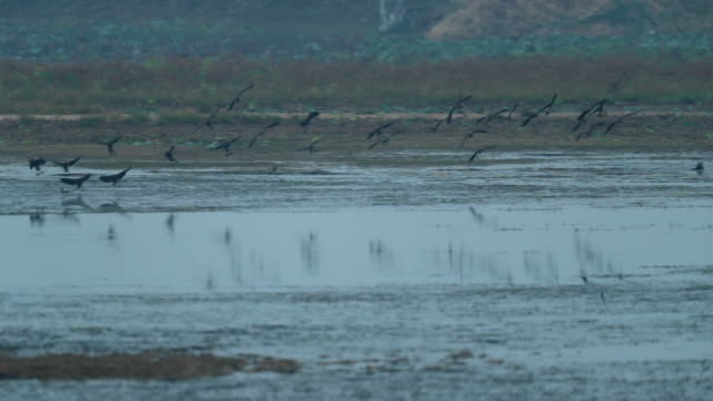 Group bird fly, scenic fo animal in the wild at morning, Nature background, slow motion