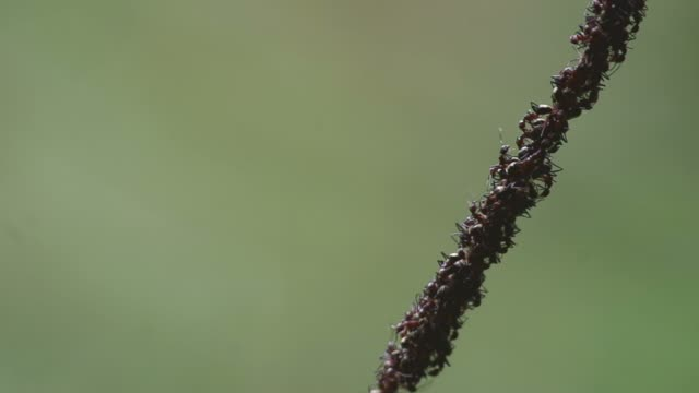 group of ant on the line video