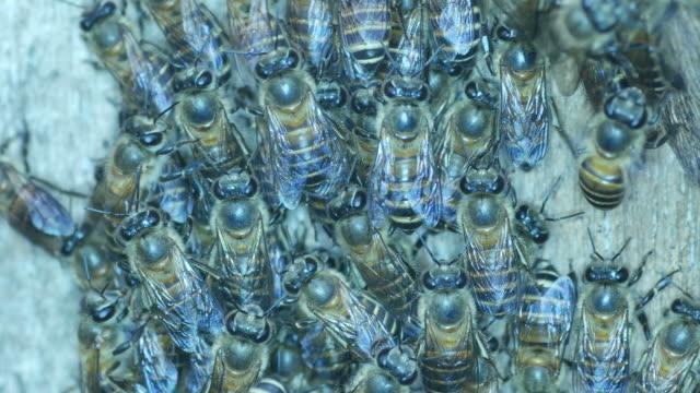 group of bee - wood texture filmów i materiałów b-roll