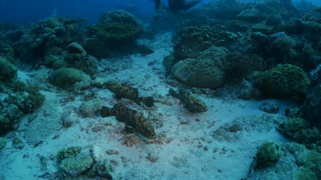 vídeos y material grabado en eventos de stock de grupo de grandes meros jaspeado - sea life park