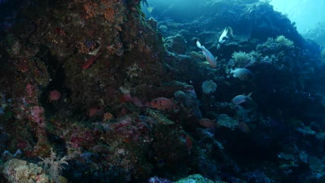 vídeos y material grabado en eventos de stock de grupo de peces de patudo en arrecife de coral - sea life park