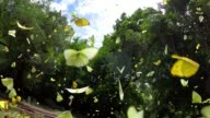 istock group of butterfly flying slow motion 1252852709