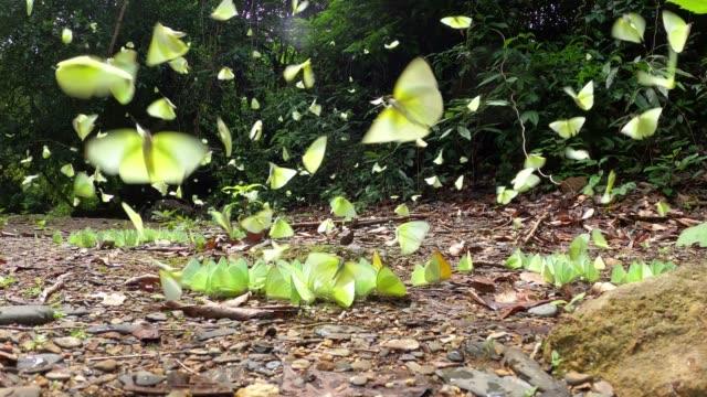 group of butterflys flying - farfalla ramo video stock e b–roll