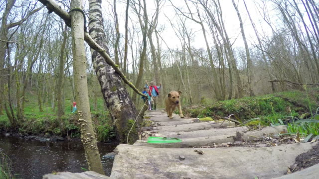 Group Of Children And Dog Crossing Stream On Wooden Bridge video