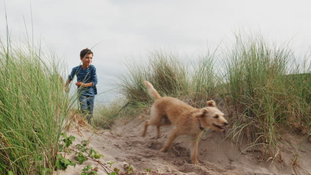 gruppo di bambini che inseguono il cane da compagnia attraverso le dune di sabbia durante le vacanze invernali - girato al rallentatore - bambino cane video stock e b–roll
