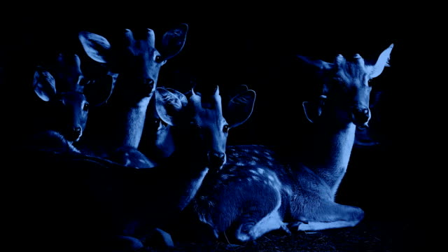 group of deer look up at night - jeleniowate filmów i materiałów b-roll