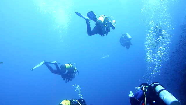 an overview of the fun sport of diving and underwater exploration Advance your training sort by: check our training calender for upcoming courses, or contact us to schedule one for you exploration, excitement, experiences.