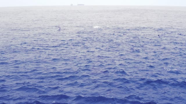 Group of dolphins in open ocean. View from boat video