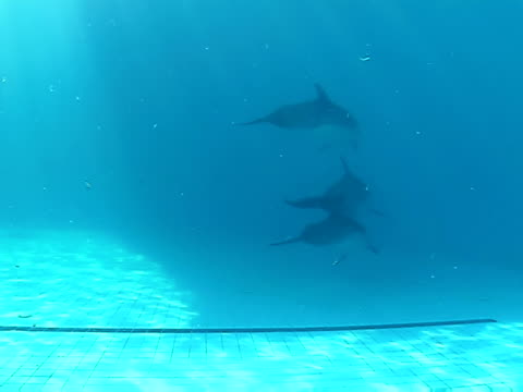 Group of dolphins video