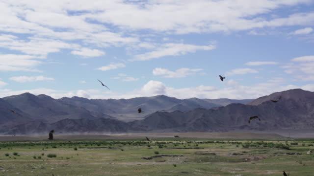 grupp av örnar som flyger i slow motion - djurkroppsdel bildbanksvideor och videomaterial från bakom kulisserna