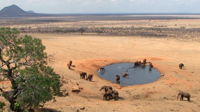 Group of elephants at a waterhole video