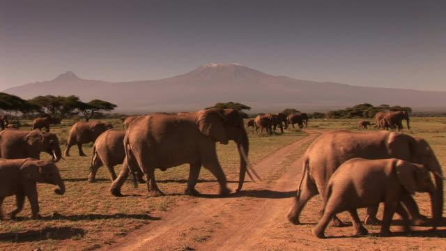 vídeos de stock e filmes b-roll de grupo de elefantes - quénia