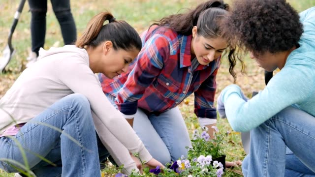 Group of female friends plant flowers in the park during a community beautification event Diverse female friends concentrate as they plant flowers  in the park. They are participating in a community beautification event. An African American woman uses a shovel to dig a hole for the flowers. People are working in the background. sociology stock videos & royalty-free footage
