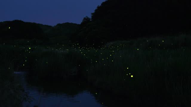 Group of fireflies