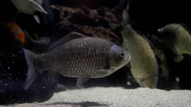 gruppe von fischen auf grund der großen aquarium - süßwasserfisch stock-videos und b-roll-filmmaterial