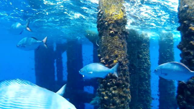 Group of fish swimming underneath a oil and gas wellhead platform show casing and platform structure with marine growth and rust. Group of fish swimming underneath a oil and gas wellhead platform show casing and platform structure with marine growth and rust. aqualung diving equipment stock videos & royalty-free footage