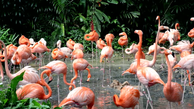 Group of Flamingos in the forest video