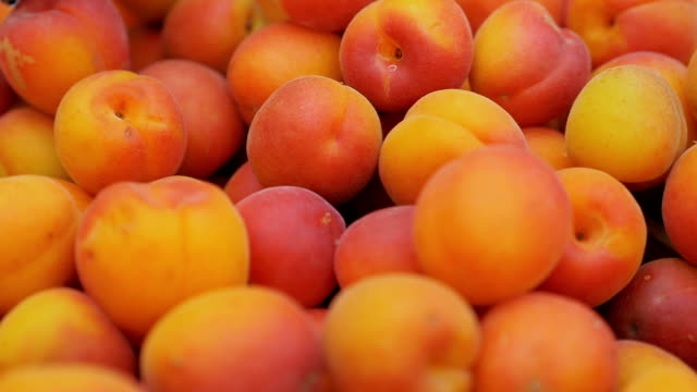 group of freshly picked fresh apricots. Fruit, nature, health group of freshly picked fresh apricots. Fruit, nature, health peach stock videos & royalty-free footage