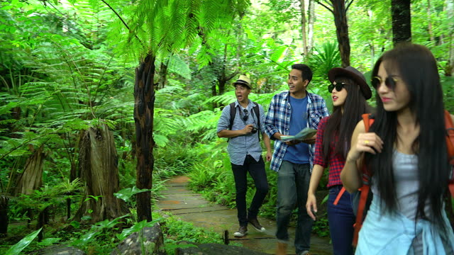 group of friends, walking in autumn forest, amazed by the beauty of nature, wearing comfortable outfits for hiking, looking far, exploring jungle trails - asia travel stock videos and b-roll footage