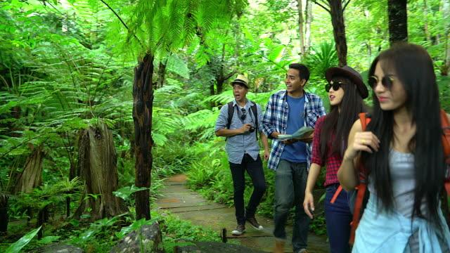 Gruppe von Freunden, Wandern im herbstlichen Wald, erstaunt über die Schönheit der Natur, tragen bequeme Outfits für Wandern, sieht weit, Dschungelpfade erkunden – Video